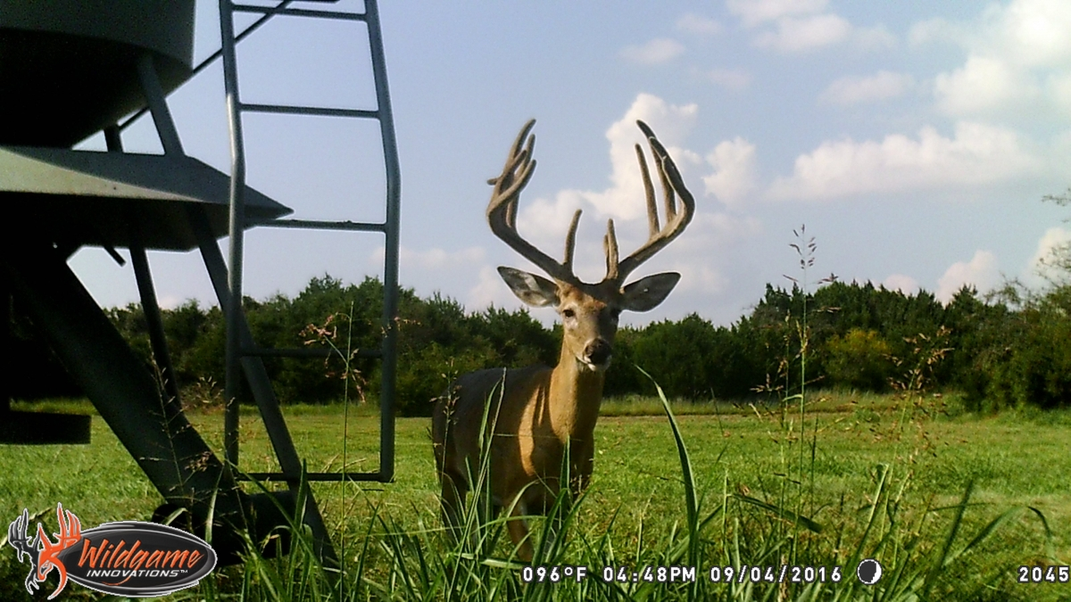 ranch deer 11