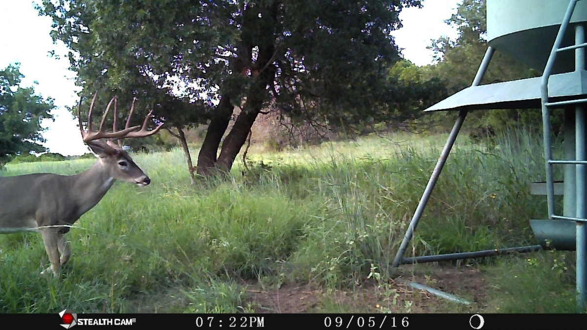 ranch deer 21
