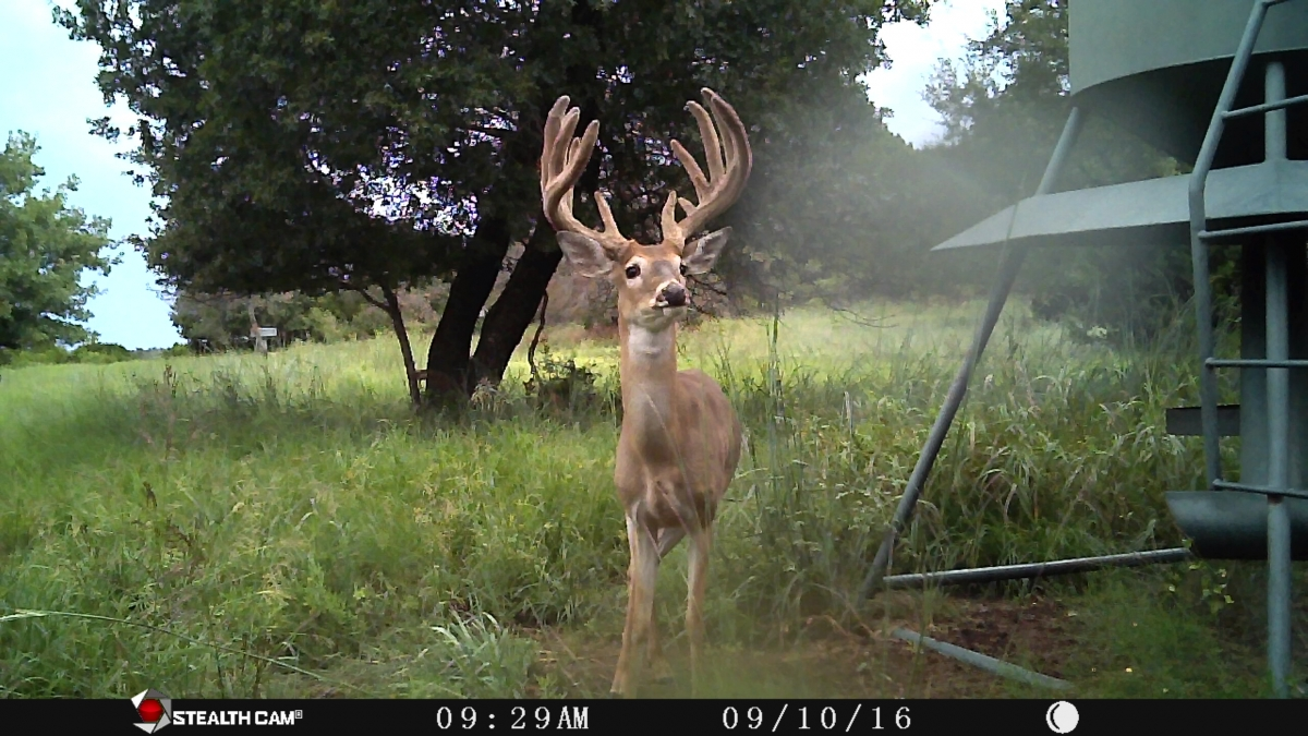 ranch deer 5